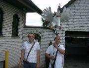 Vogel_21_06_2012_004